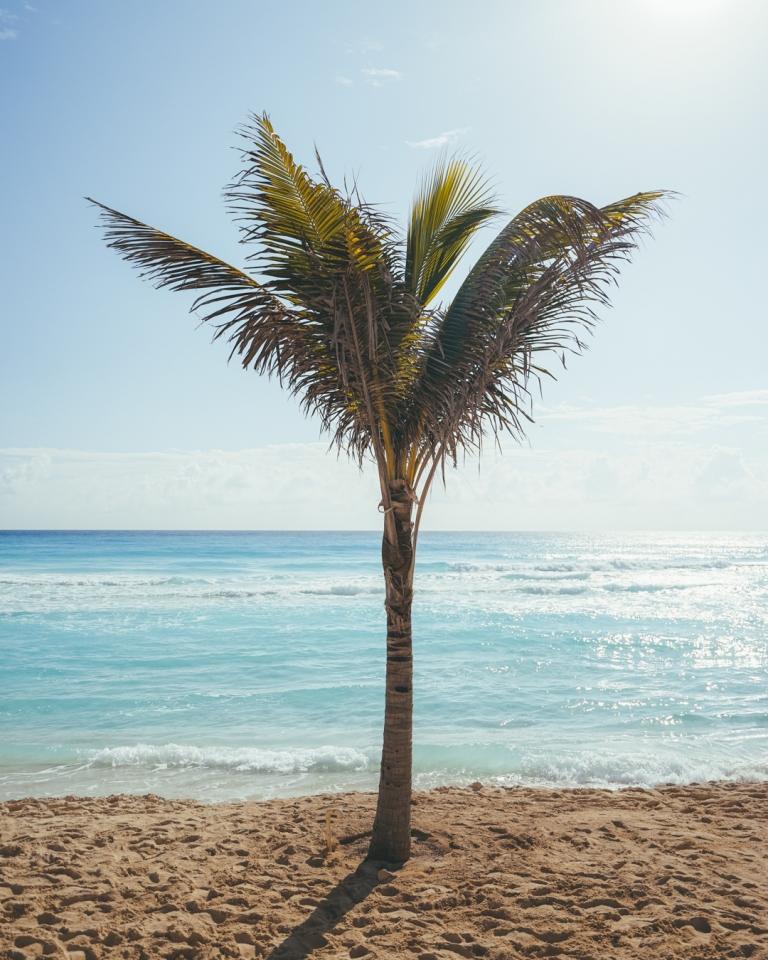 CancunAPalmTreeSaysAMillionThings